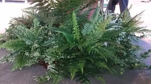 人工植物①‐2.JPG