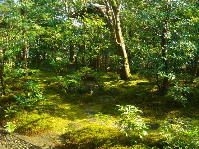 http://www.oniwanotakumi.com/takumi/14katsura-2.jpg