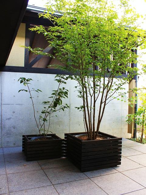http://www.oniwanotakumi.com/takumi/niwakichi4.jpg